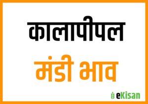 Kalapipal Mandi bhav Today
