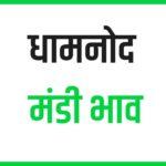 dhamnod mandi bhav