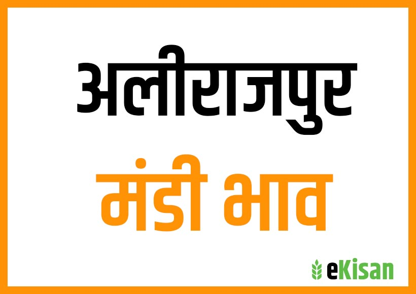 alirajpur mandi bhav