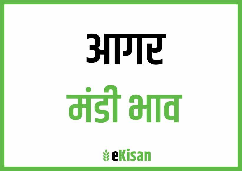 Agar Mandi Bhav