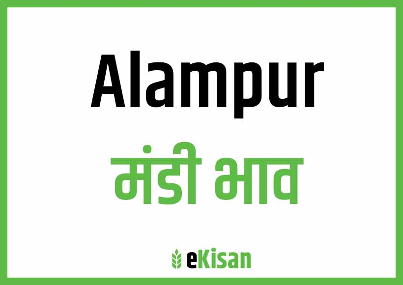 Alampur Mandi Bhav