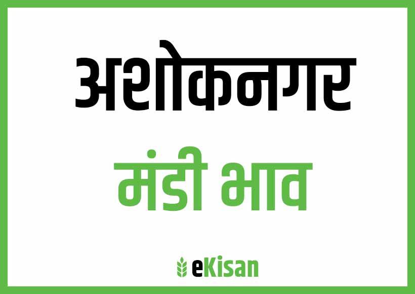 Ashoknagar Mandi Bhav