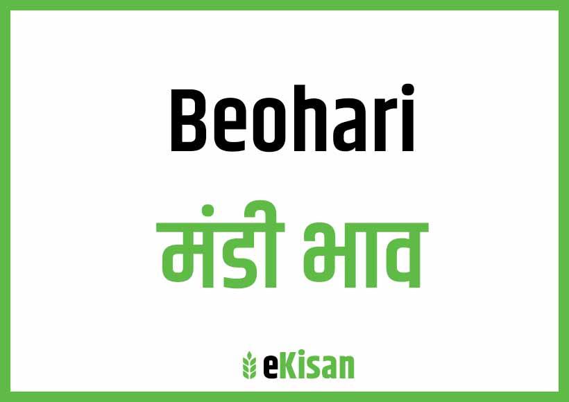 Beohari Mandi Bhav