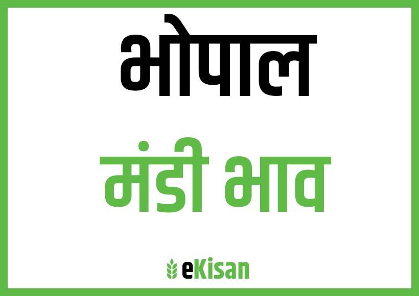 bhopal mandi bhav