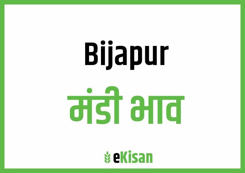 Bijapur Mandi Bhav