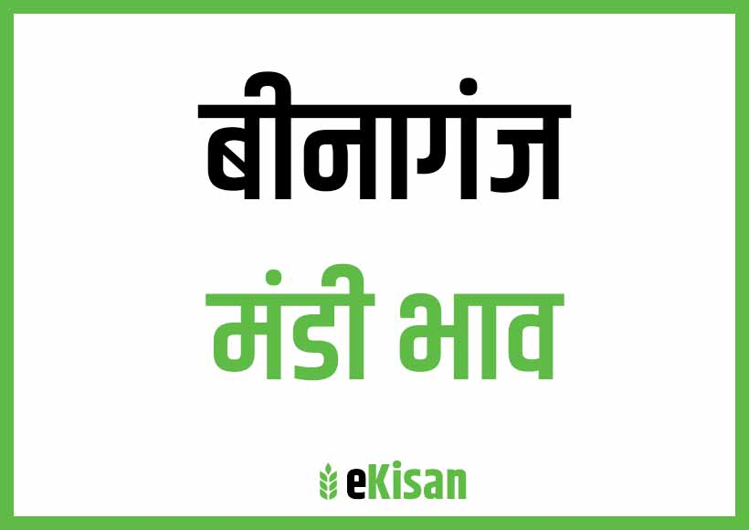 Binaganj Mandi Bhav