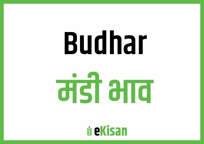 Burhar Mandi Bhav