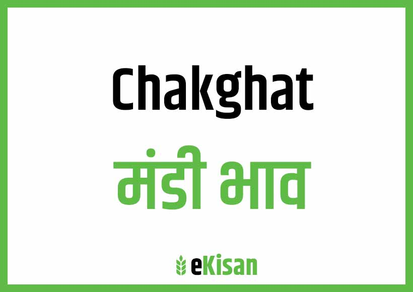Chakghat Mandi Bhav