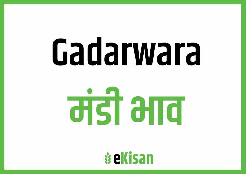 Gadarwara Mandi Bhav