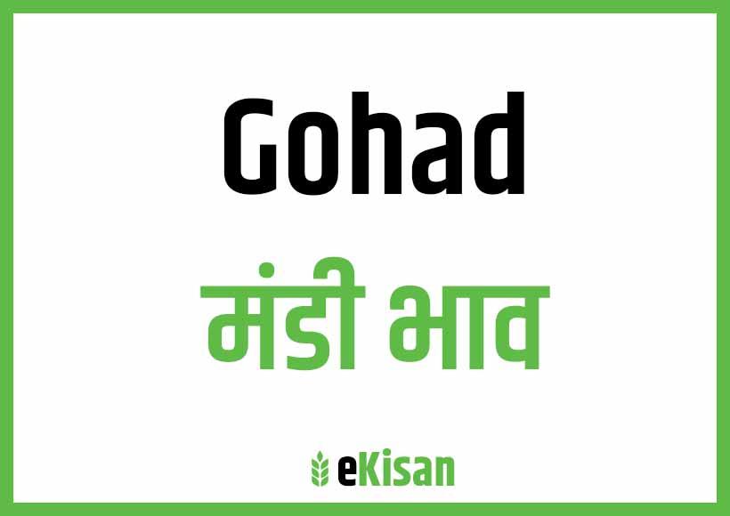 Gohad Mandi Bhav