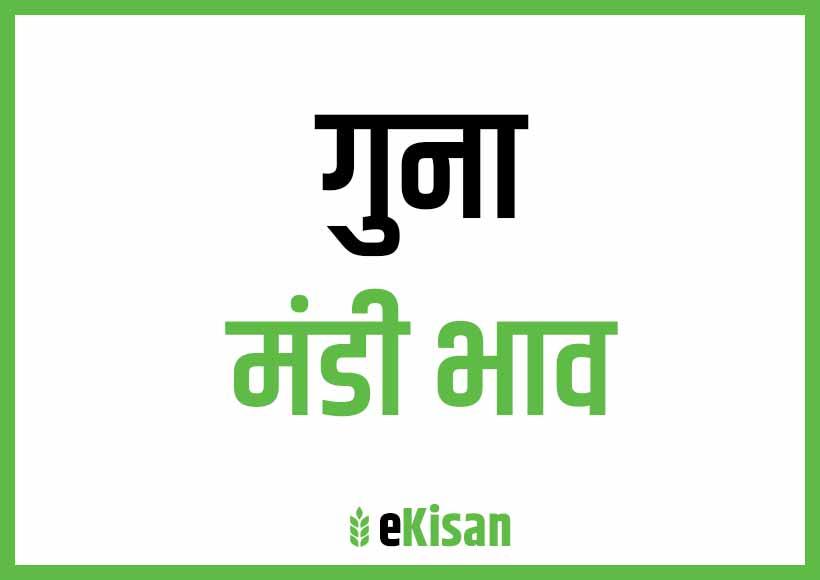 Guna Mandi Bhav
