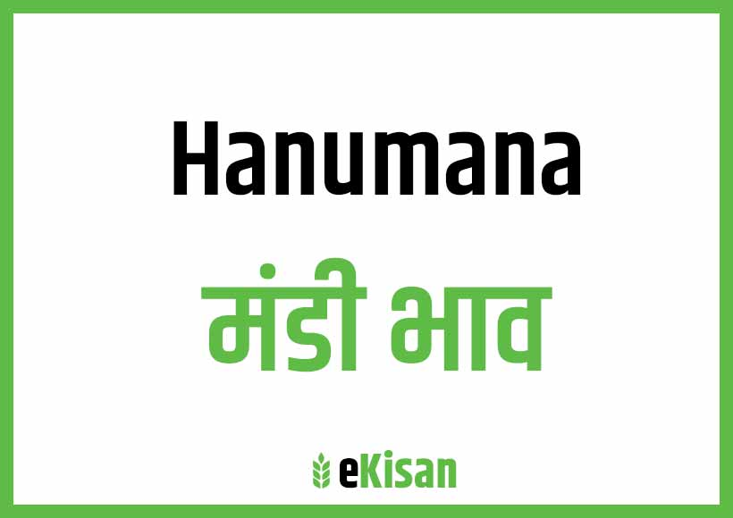 Hanumana Mandi Bhav