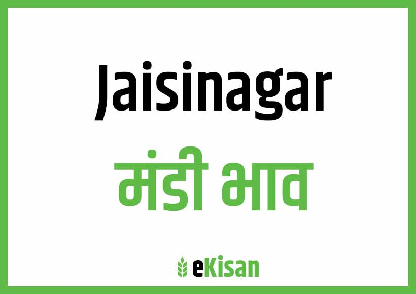 Jaisinagar Mandi Bhav