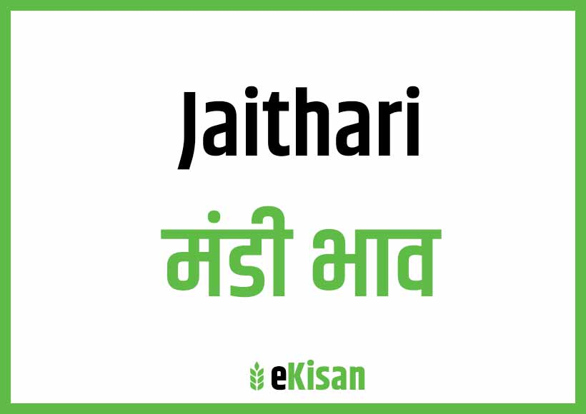 Jaithari Mandi Bhav