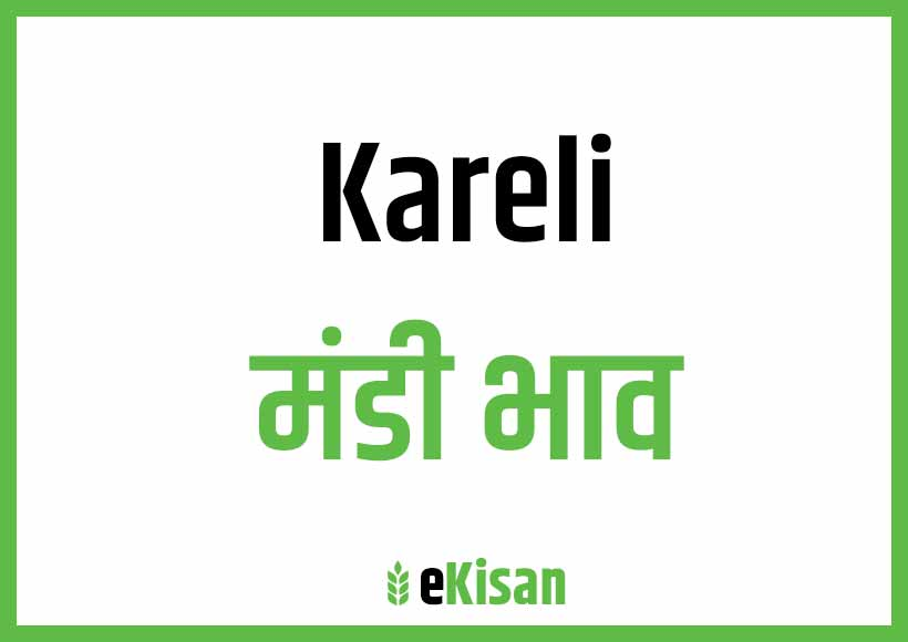 Kareli Mandi Bhav