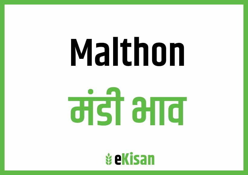 Malthon Mandi Bhav
