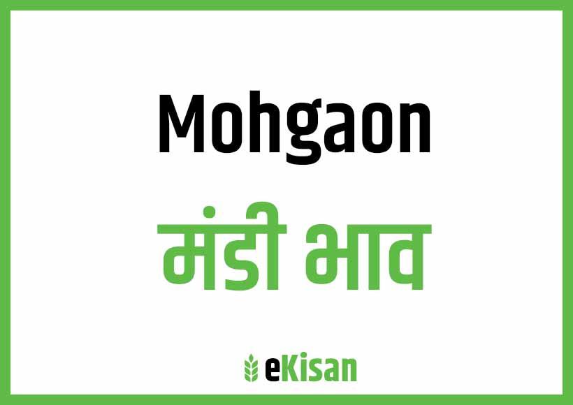 Mohgaon Mandi Bhav