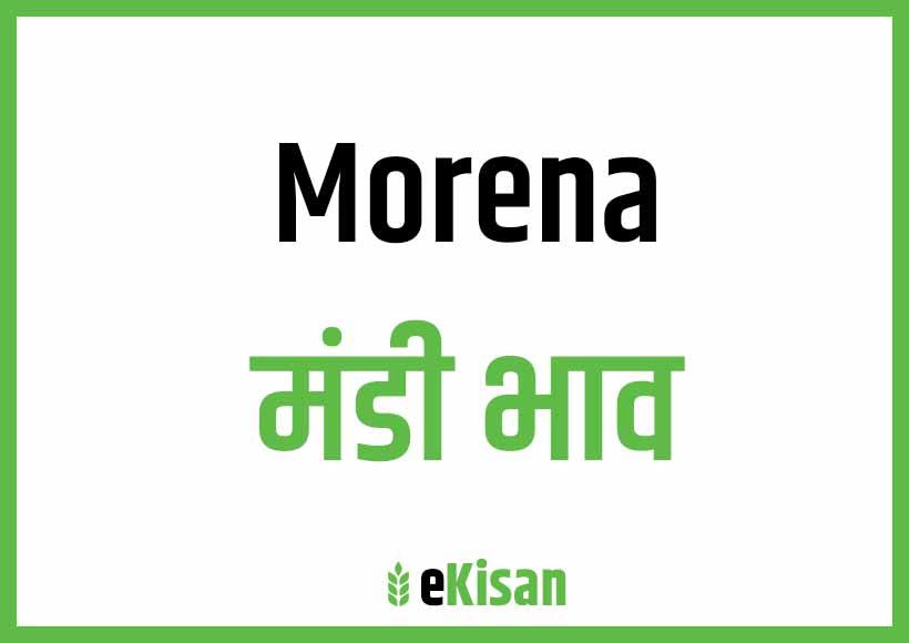 Morena Mandi Bhav