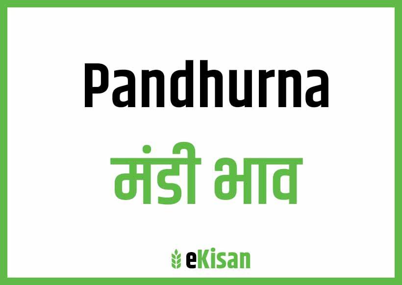 Pandhurna Mandi Bhav