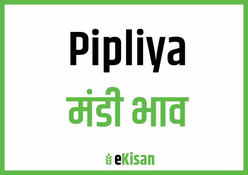 Pipliya Mandi Bhav