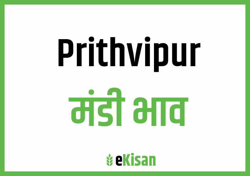 Prithvipur Mandi Bhav