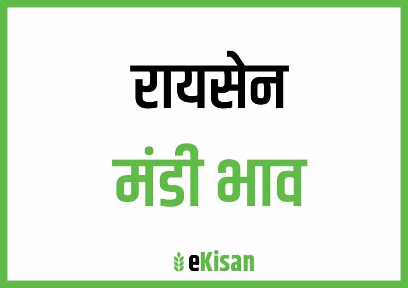 Raisen Mandi Bhav