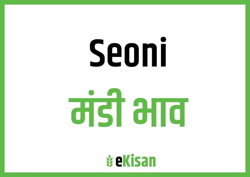 Seoni Mandi Bhav