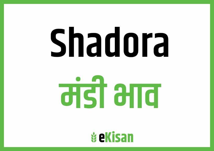 Shadora Mandi Bhav