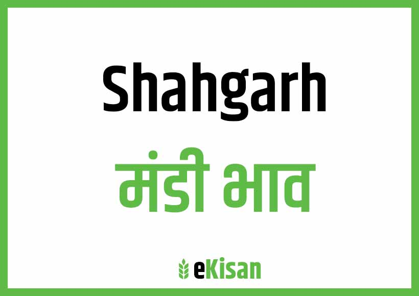 Shahgarh Mandi Bhav