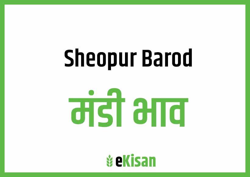 Sheopur Badod Mandi Bhav