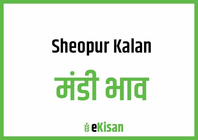 Sheopur Kalan Mandi Bhav