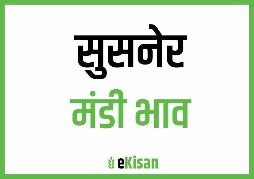 Susner Mandi Bhav