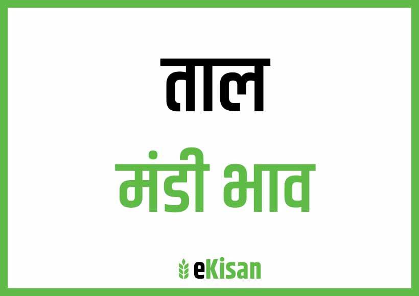 Taal Mandi Bhav