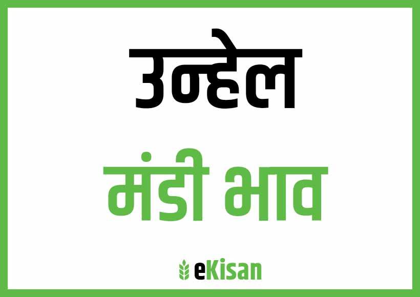 Unhel Mandi Bhav