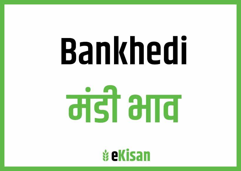 Bankhedi Mandi Bhav