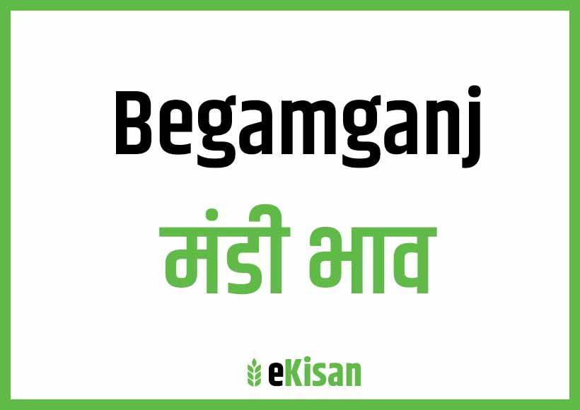 Begamganj Mandi Bhav