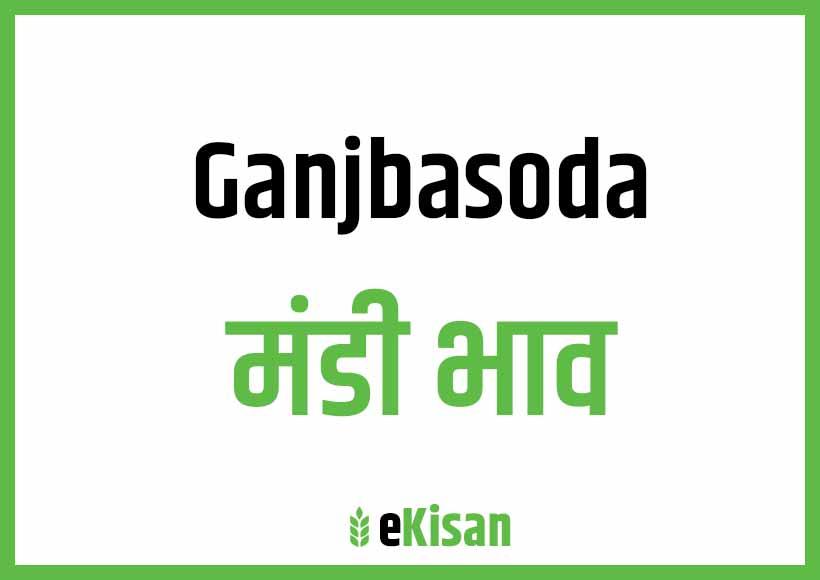 Ganjbasoda Mandi Bhav