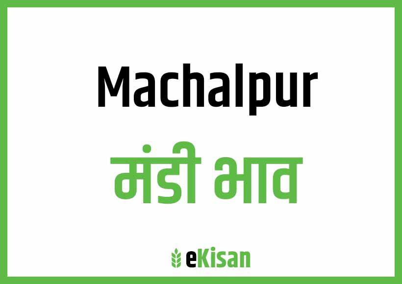 Machalpur Mandi Bhav