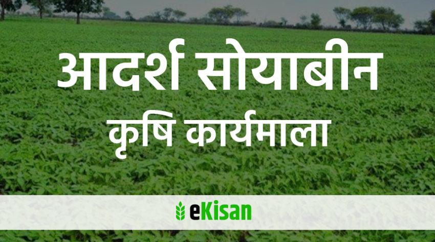 aadarsh soyabeen krishi karyamala