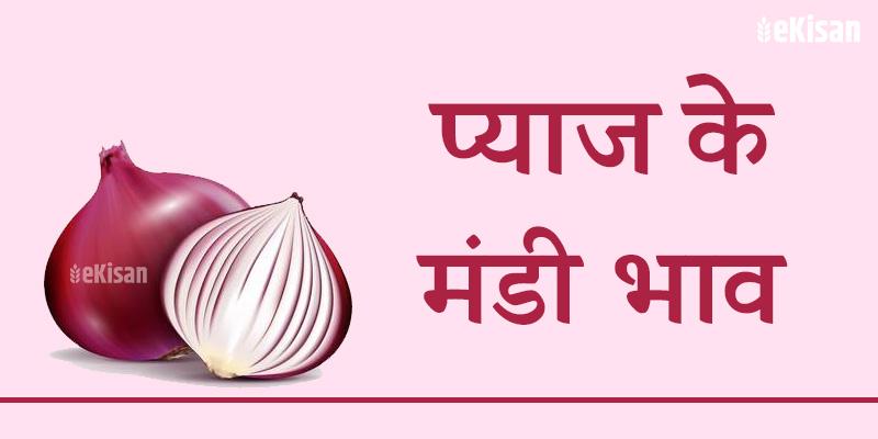 pyaj mandi bhav
