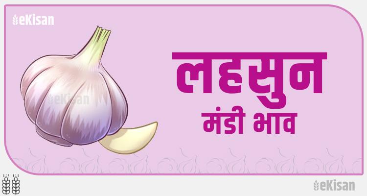 lahsun garlic mandi bhav
