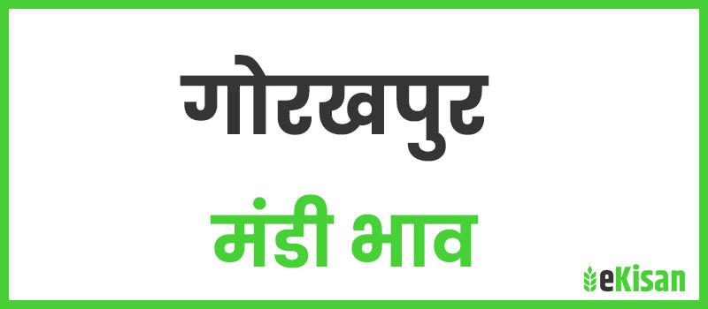 gorakhpur mandi bhav